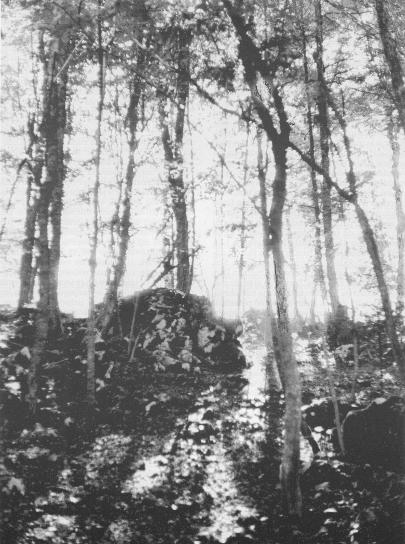 Svetloba nad grobiščem v Kočevskem rogu