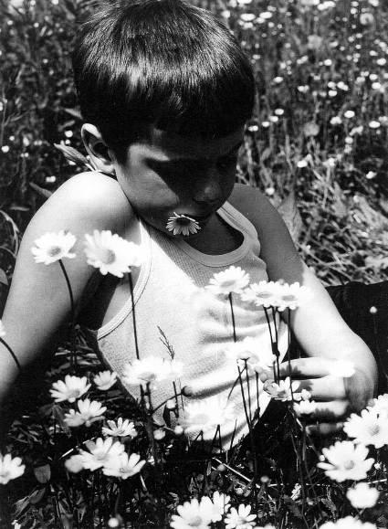 Zagledan v skrivnost cvetice