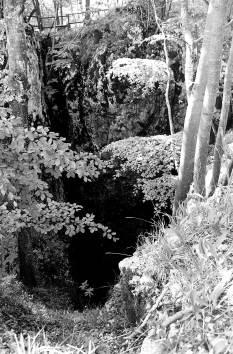 Zalesnika - Globoke so moje korenike