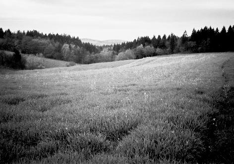 Cvetoče polje ob škrjanškem potoku – Mihov svet