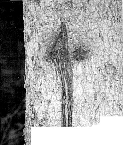 S slovenske transverzale 1945
