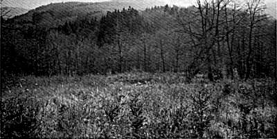 Molčanje gozdov
