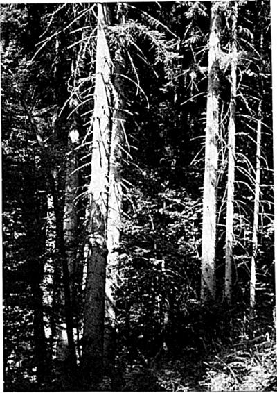 Gozd nad Kraljevim grabnom