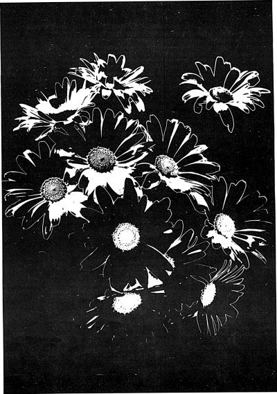 Črne rože