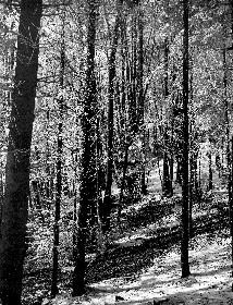 Prvi zimski dan v gozdu