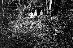 Množično grobišče Ciganov pri Mavrlenu nad Črnomljem