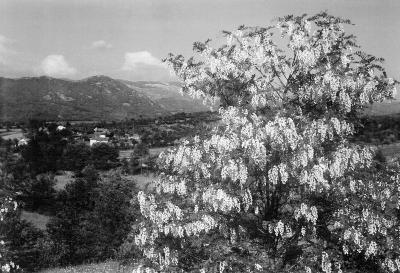 Pomlad je razkošje slovenske zemlje